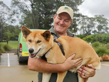 Dingo expecting Australian Reptile Park