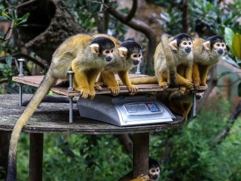 London Zoo Weigh In 2021