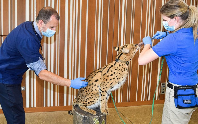 Covid Vaccines for Brookfield Zoo Animals