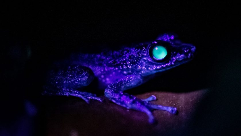 Chester Zoo Share Glow in the Dark Animals