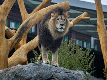 Pepper Family Wildlife Center Opens at Lincoln Park Zoo