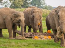 Trick or Treat at ZSL Whipsnade Zoo