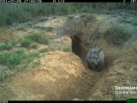Northern Hairy Nosed Wombat Partnership AWC