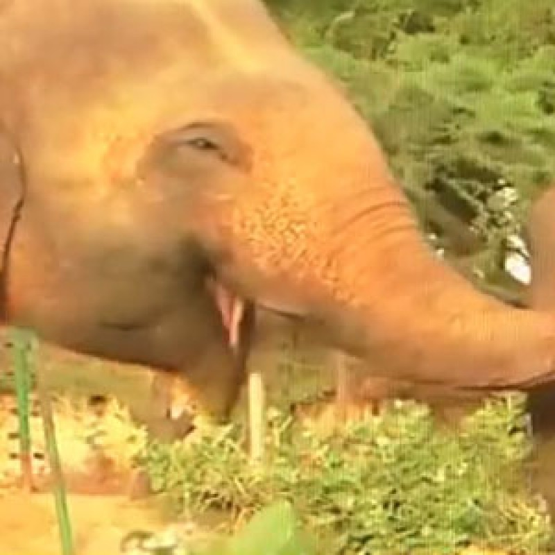 The tears of an elephant who is free after 50 years