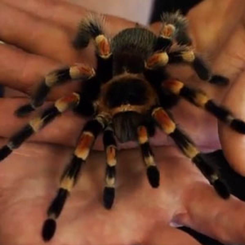 Are spiders dangerous?