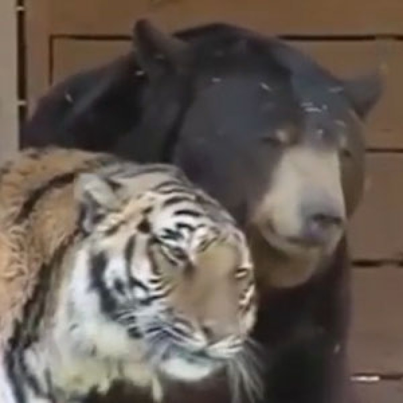Meet these unlikely animal friends