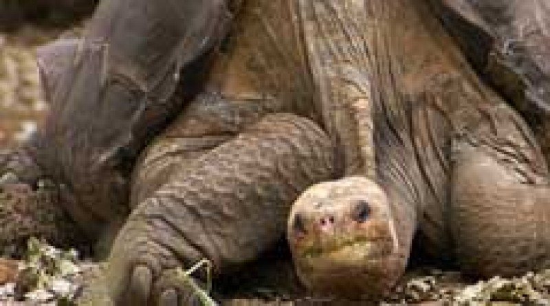 Tortise Subspecies Gone Forever
